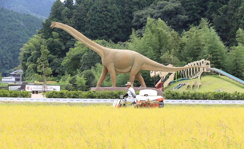Forest where dinosaur lived