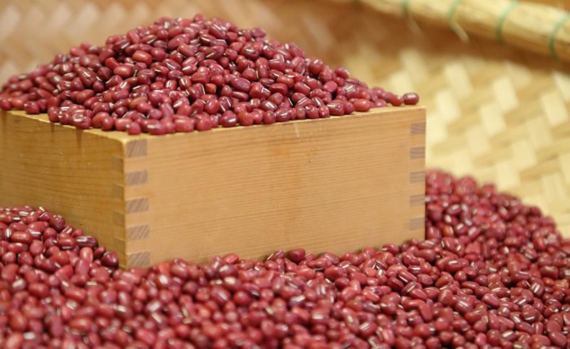 Tamba large-grained variety of the adzuki bean